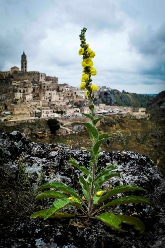 Miracle in Matera - Gallery Slide #15
