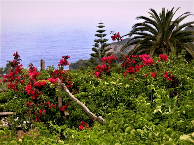 Anacapri  . . . The Hidden Side of Paradise - Gallery Slide #49